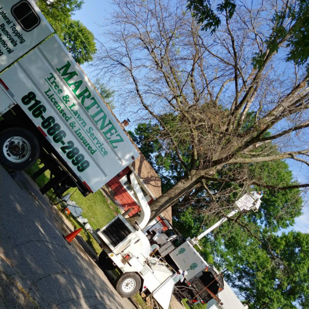 All Martinez Tree & Lawn Services Offers you the Most Competitive Prices.