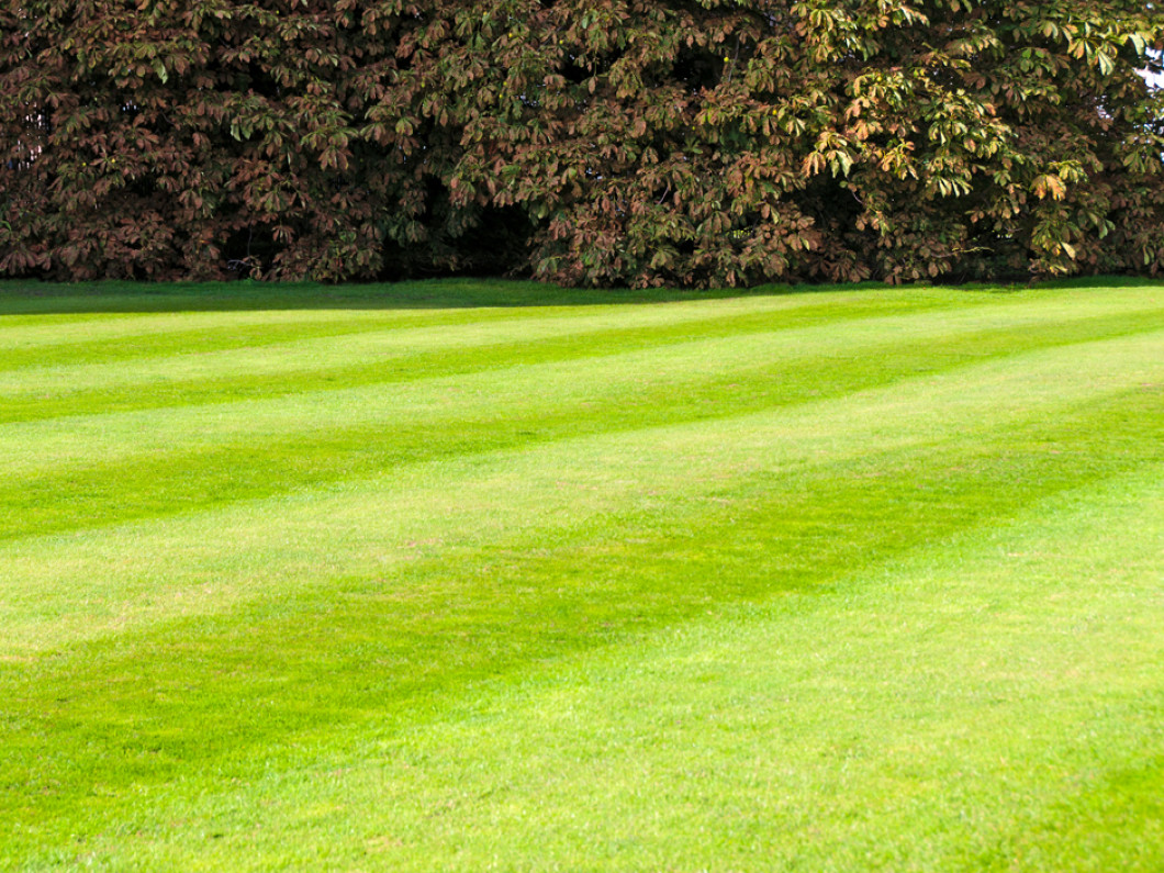 Stay on top of lawn maintenance all year long